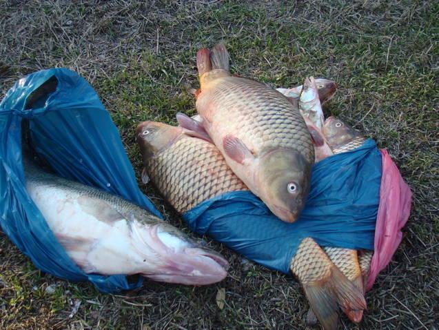 Intervenţii umanitare si Peşte comercializat fără documente legale