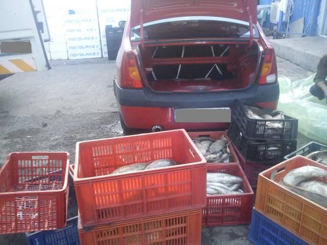 Sute de kilograme de peşte şi icre ridicate în vederea confiscării