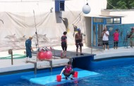 Alex Velea a hranit delfinii la Constanta