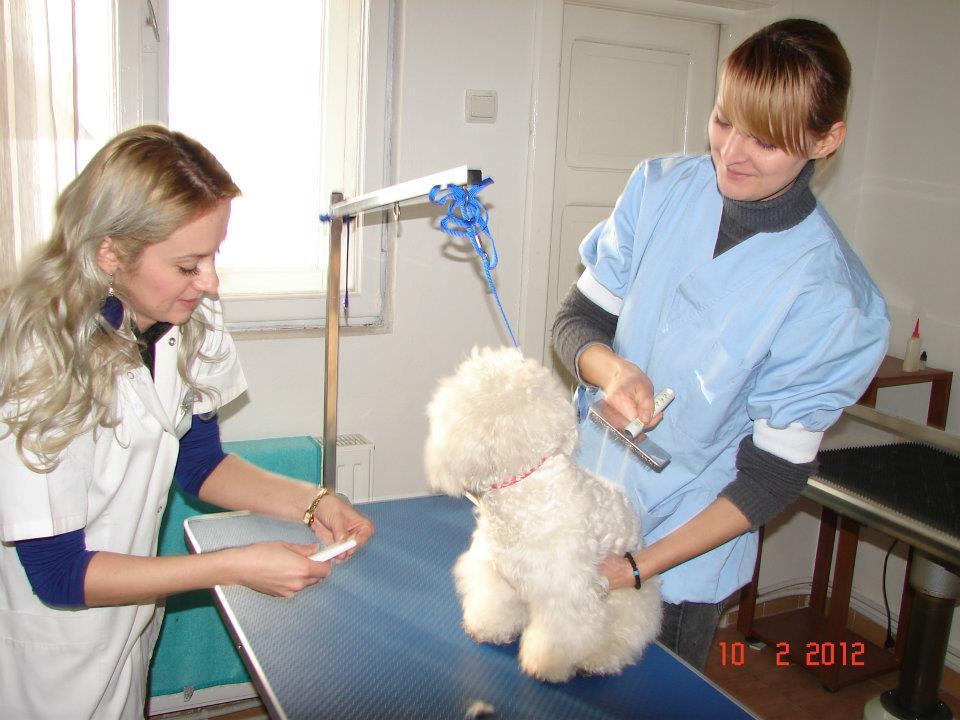 Prima Şcoală de Coafor Canin din România