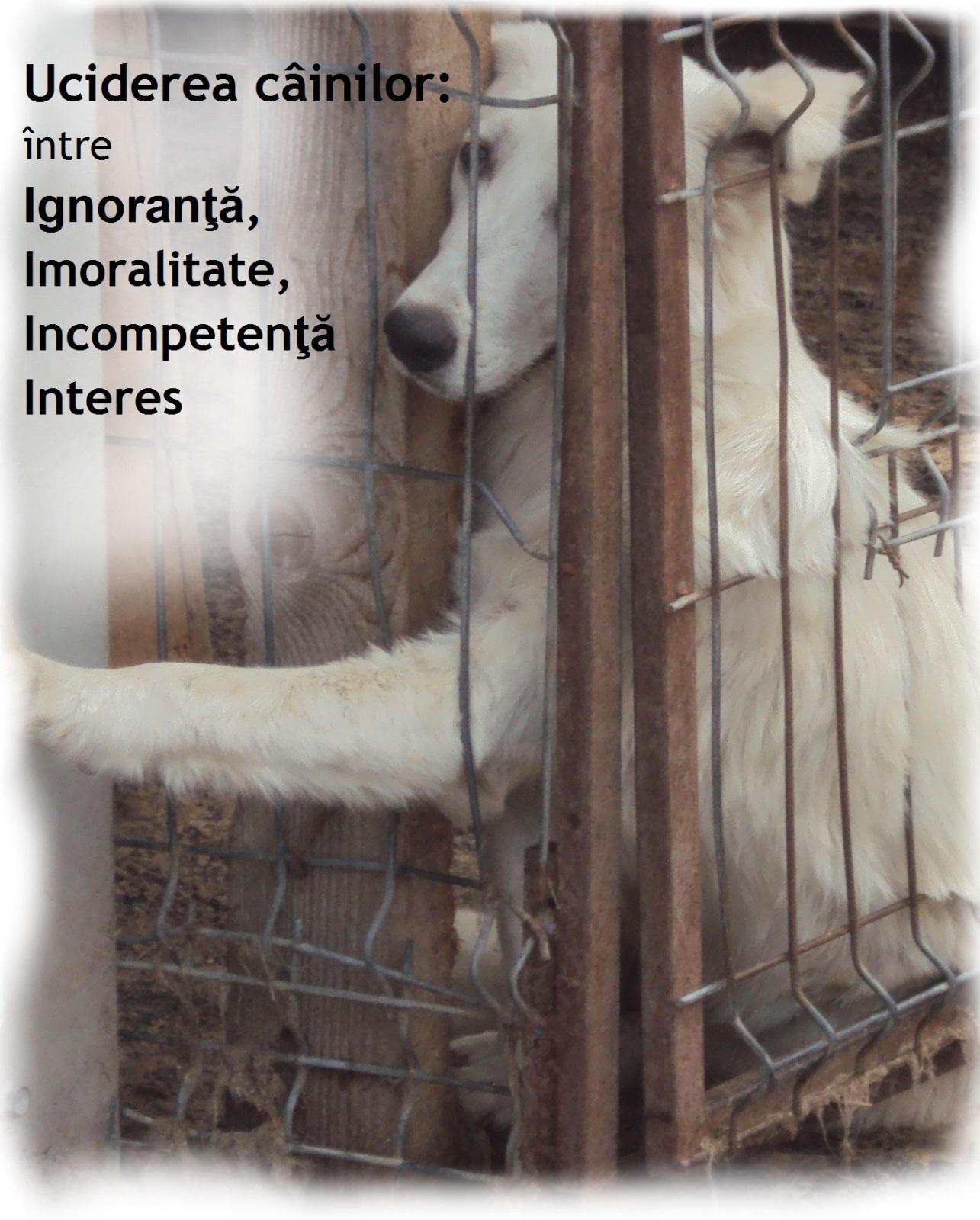 Conferinta - Uciderea cainilor: intre Ignoranta, Imoralitate, Incompetenta si Interes
