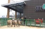 Crăciun în Laponia la City Park Mall Constanța