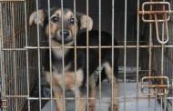 Animale închise de o săptămână într-un apartament din Năvodari. Oamenii legii închid ochii!