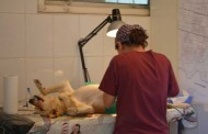 Campanie de sterilizare gratuită, la Mangalia