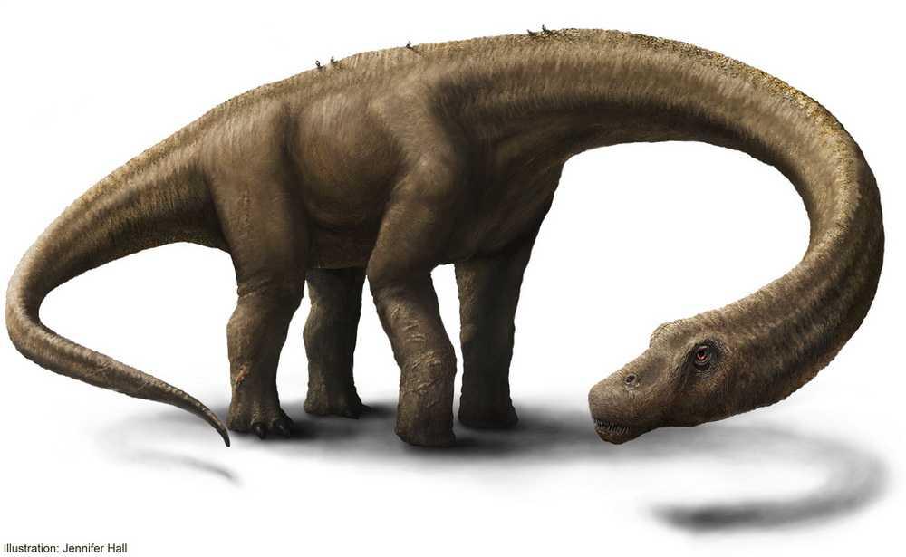 Scheletul unui  dinozaur uriaș descoperit in Argentina