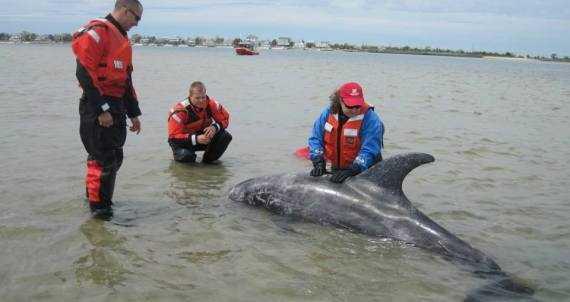 Eșuarea delfinilor o problemă internațională