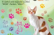 Expoziţie Internaţională de Pisici WCF la Maritimo