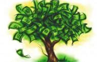 Banii cresc în copaci?