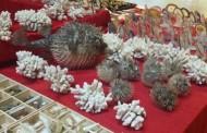 Pietre preţioase şi fosile de dinozauri la ExpoMineralia