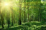 Norvegia este prima țară care interzice tăierile de copaci