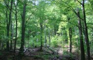 Păduri propuse ca situri naturale UNESCO