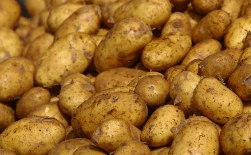 Cartofi din Egipt cu o bacterie periculoasă, interzişi în magazinele din România!