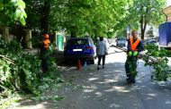 Toaletarea arborilor continuă în Constanța