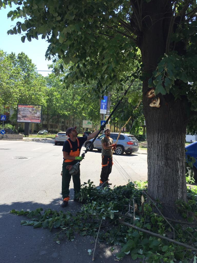 Continuă toaletarea arborilor care încurcă vizibilitatea semnelor de circulație