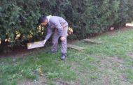 Atenție, se reiau acțiunile de deratizare în municipiul Constanța