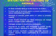 Focurile de artificii, coșmarul animalelor!