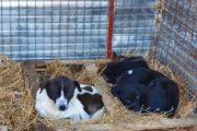 Pregătiri pentru iarnă la adăpostul pentru căței