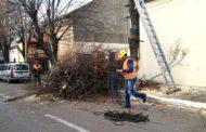 Lucrări de toaletare a arborilor la Constanța