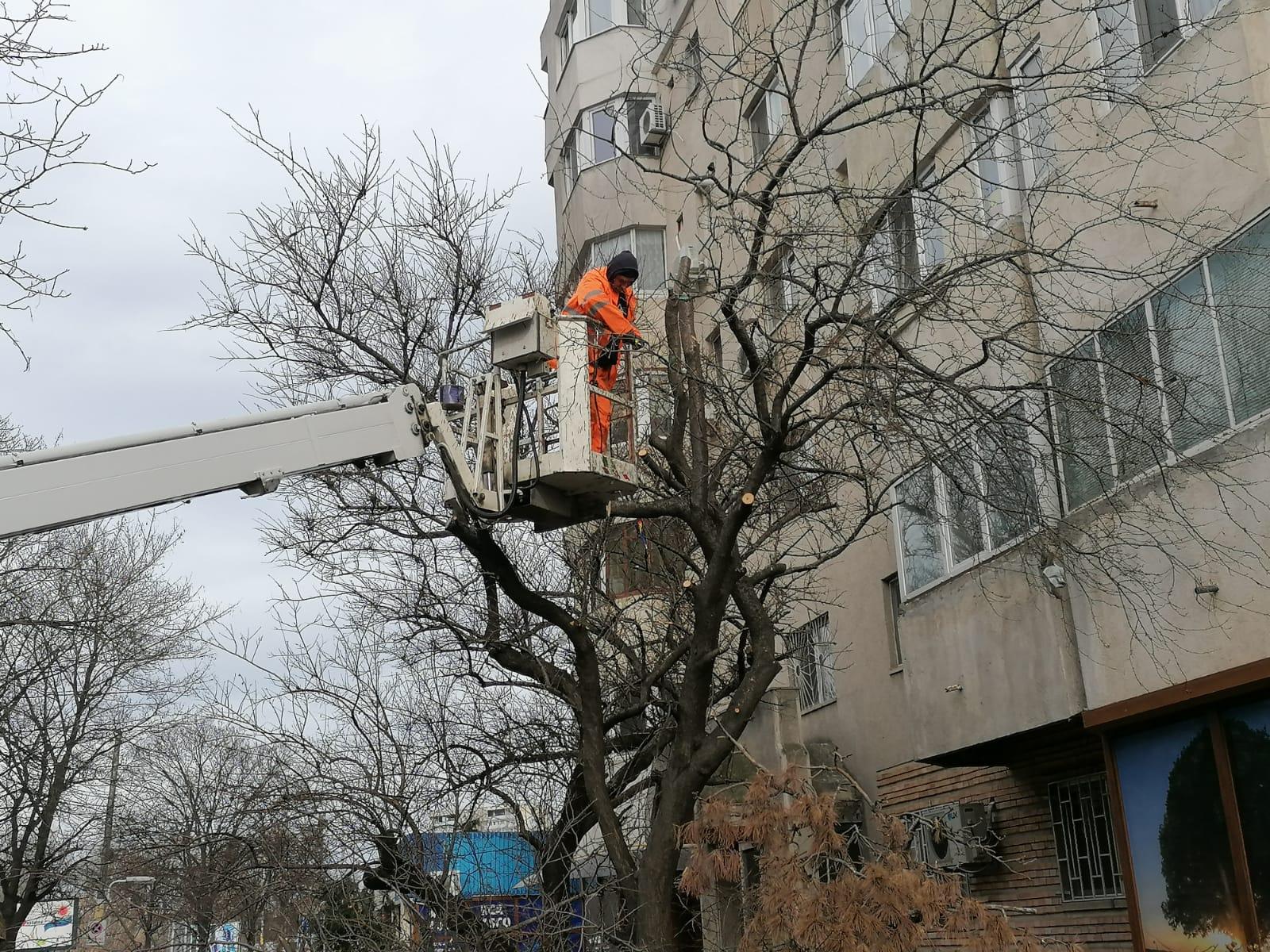 Continuă lucrările de toaletare a arborilor