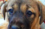 Campanie de adopție a câinilor fără stăpân