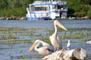 Calendarul evenimentelor din destinația turistică județul Tulcea pentru 2020