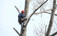 Lucrări de toaletare și corecție a arborilor din Constanța