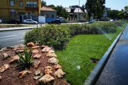 Se montează rulouri de gazon pe bulevardul Mamaia