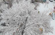 Ninge la Constanța